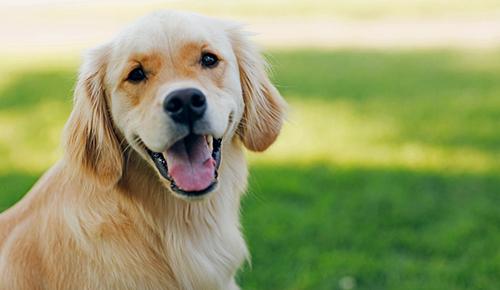 dog waste story